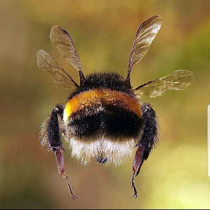 flying bumble bee,, humming like a bumble bee, simple soothing pranayama, AtemübungenYoga Einzelstunden in Innsbruck