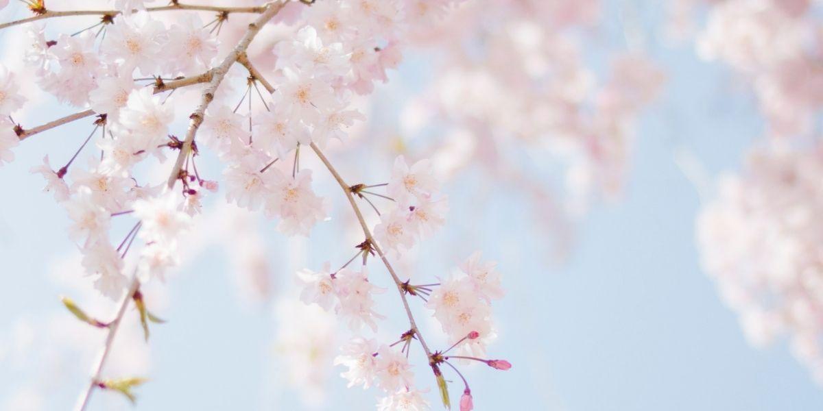 Meditatiereis energie in lente