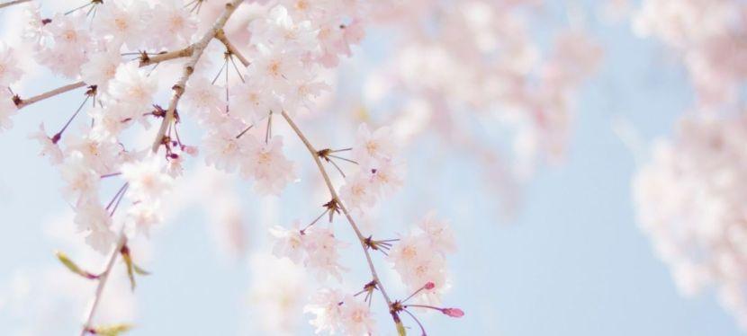 Meditatiereis voor nieuwe energie in de lente