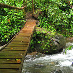 Arenal Bridge over River in the Forest
