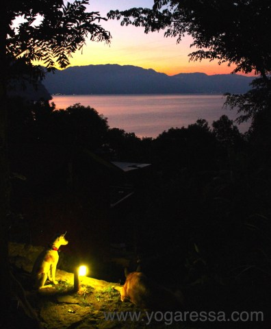 Dogs join me to watch the sunrise on Lake Atitlan