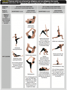 Yoga Synergy: Anatomy and Physiology of Yoga: Chapter 4: The Hip: Table 4.8a