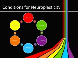neuroplasticity-and-technology-4-728