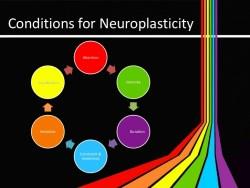 neuroplasticity-and-technology-4-728