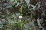 Buskett Forest_583