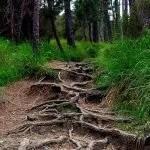 roots-508175_1280-1-e1557686239386.jpg