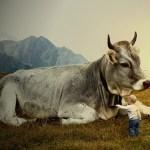 Yogic diet, Yoga in Austria, Milk