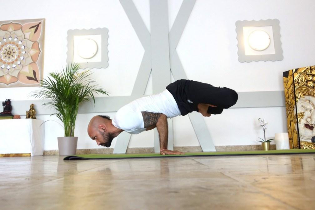 padmamayurasana  yogtemple - Yoga Asana Glossary