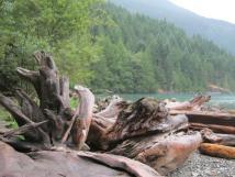 driftwood1