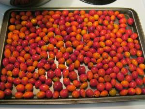 rose hips for dehydrating