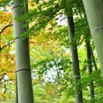 2019年に竹の花が全国で開花しているコメント・画像