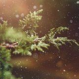 本場イタリアのクリスマス
