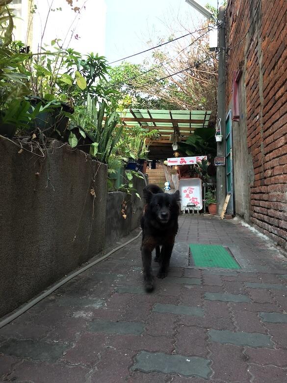 台湾の宿では動物を飼っているところが多い