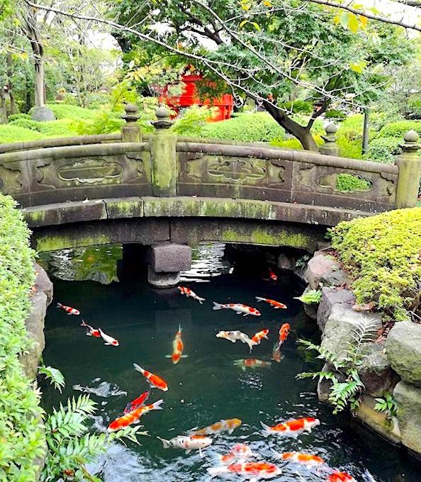浅草寺の庭園の錦鯉