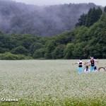 福島町 千軒そばの花鑑賞会 2013 松前神楽 神遊舞