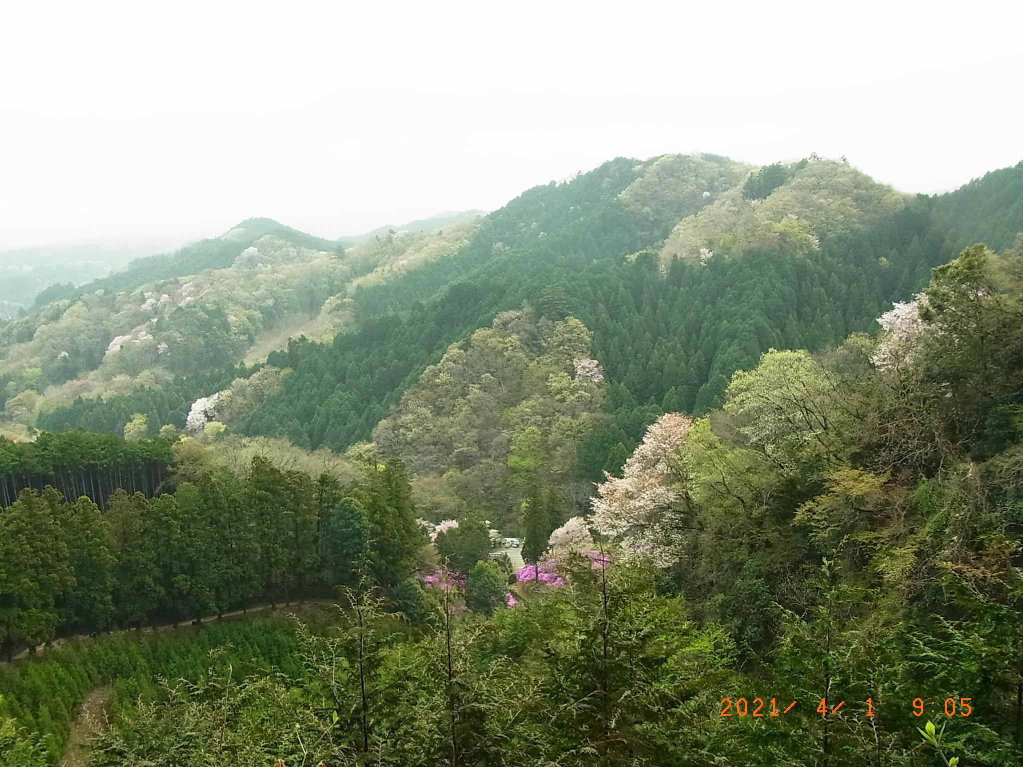 新緑の春山