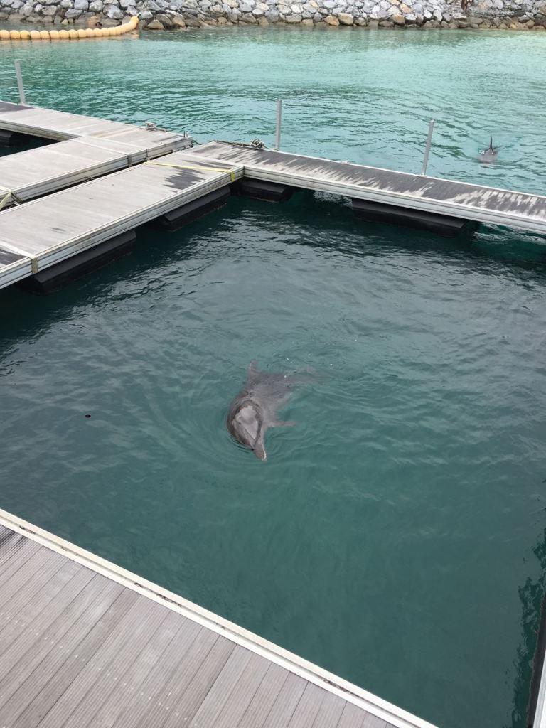 ルネッサンスのイルカラグーン。こんなに近くでイルカが見れる機会も珍しいです。