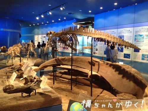 名古屋港水族館15