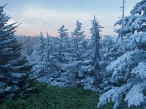 11月初めの渋峠の霧氷