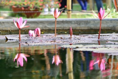 lalBagh_20160123_12-13_01