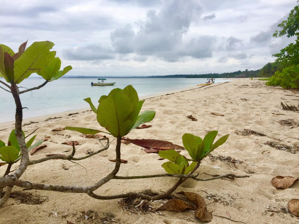 Bocas del Toro Panama with kids, Punta Vieja beach