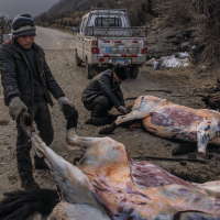 Roadside yak butchery near Kangding - China