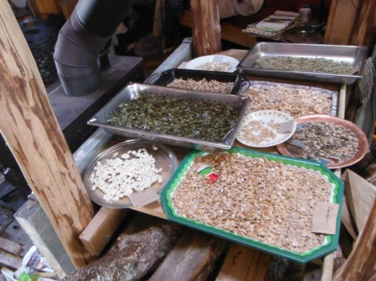 drying squash seeds