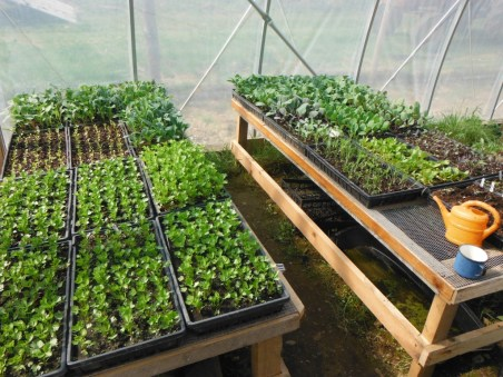 spring seedlings 2