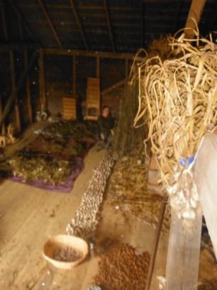 barn loft seed curing garlic