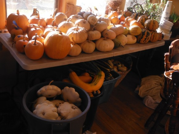 curing squash in the house
