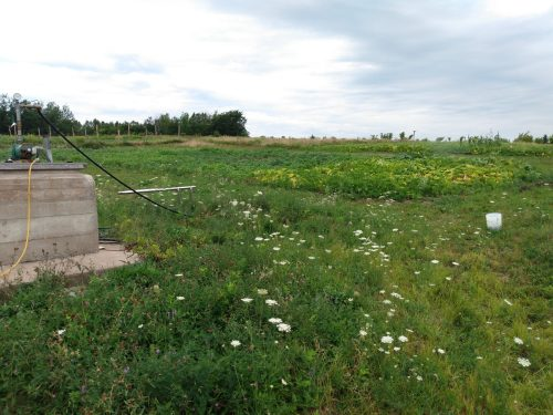 irrigating from field well