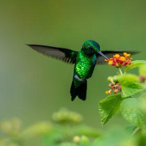 bird summer animal leaf