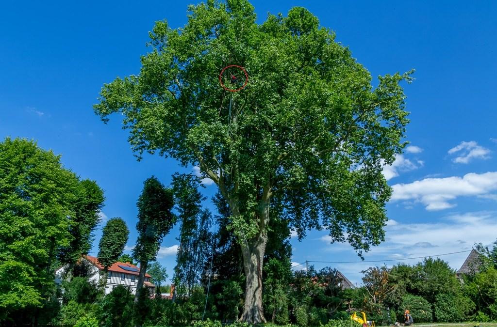 Arbor environnement : de nos racines à la lumière