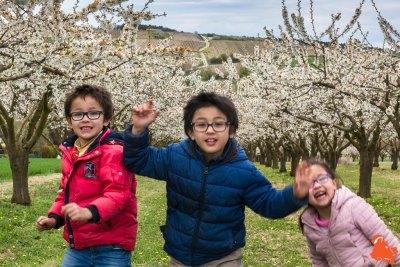 2019 04 06 - Les cerisiers de Jussy - YET89-18