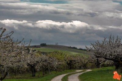 2019 04 06 - Les cerisiers de Jussy - YET89-6