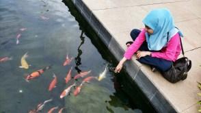 Main Di Kolam Ikan