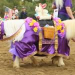 Horse Costume Yorbalinda411