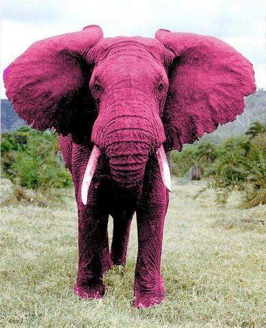 No pienses en elefantes rosas