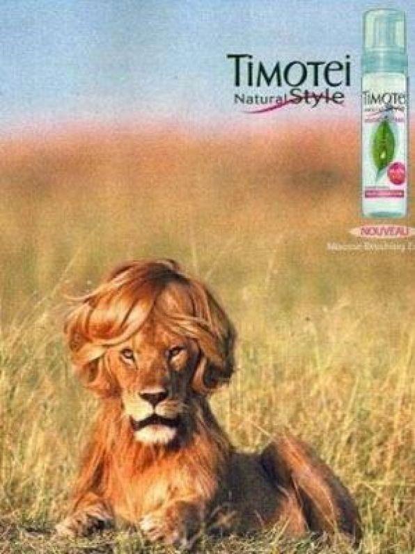 La motivación intrínseca del león