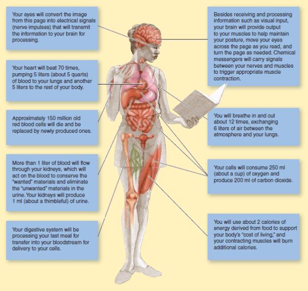 fakta fisiologis