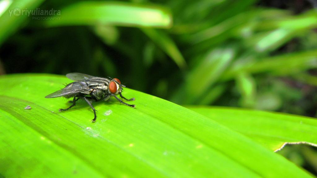 Lalat dan Ketidakberdayaan Kita
