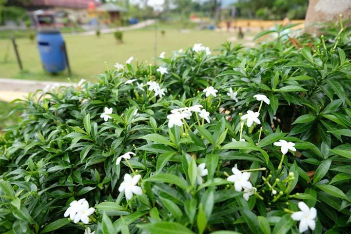 Bunga di Ngarai Maaram Bukittinggi