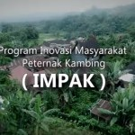 Inovasi Masyarakat Peternak Kambing (IMPAK)