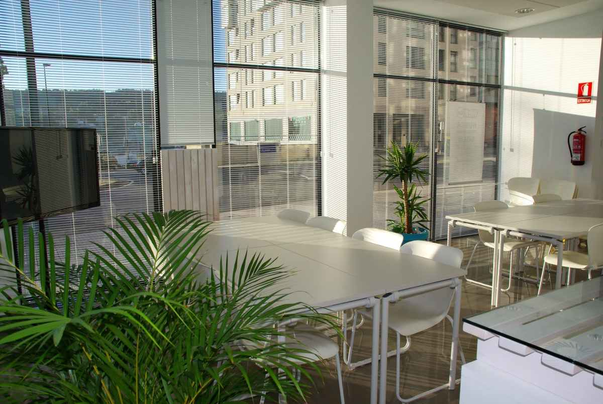 Planting a healthier office