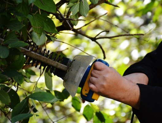 Winter pruning and cutting back