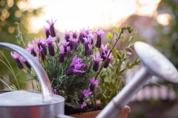 For the vintage garden look, call York Gardening