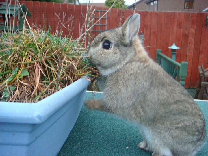 Pug diaries -The tale of the disappearing rabbit and other strange events (4/6)