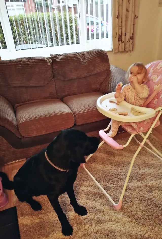 Breakfast time for Charlotte. Toby the dog waiting patiently for her to feed him. Tell her no, and she laughs and does it anyway. Little terror. This parenting full time isn't an easy task.