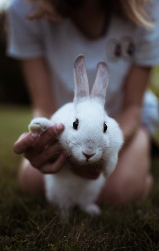 Rabbits could be a great choice for your perfect family pet.