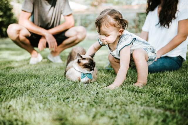 Cats are the go to animal for a perfect family pet.